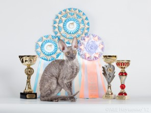26 ��� �.��������� -  Best of Breed